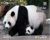 Puzzle sticker 17x20 Panda
